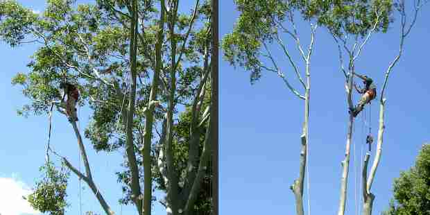 Arborlife tree services toowoomba