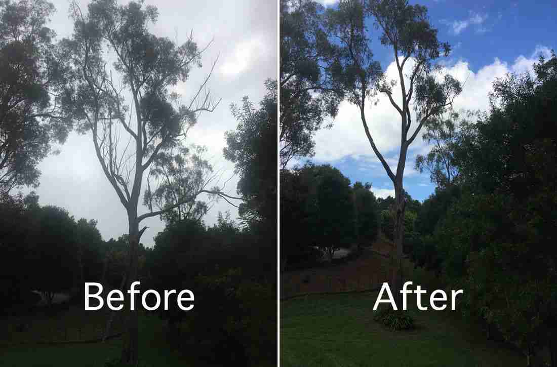 before and after tree pruning services Toowoomba