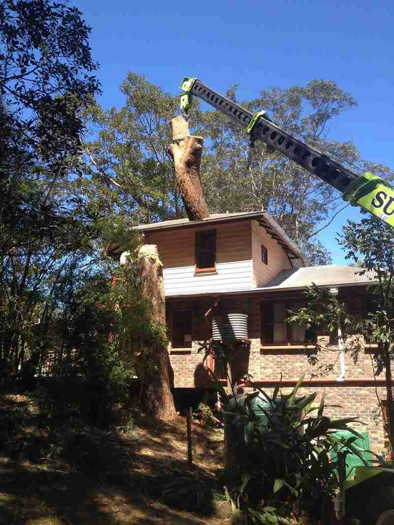 house around tree services Toowoomba